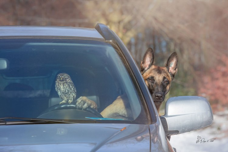 dog-owl-14