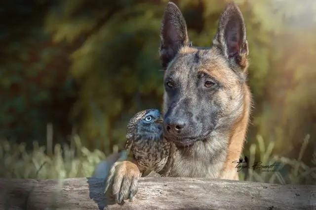 dog-owl-3