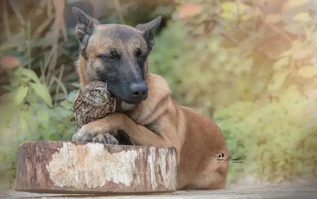 dog-owl-6