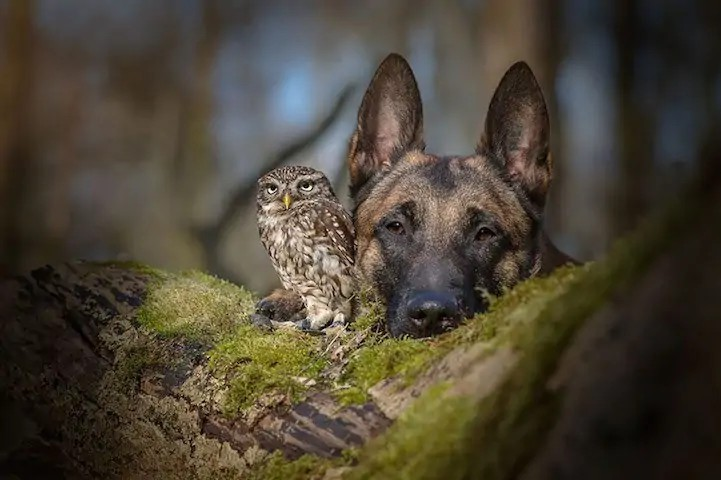 dog-owl-7