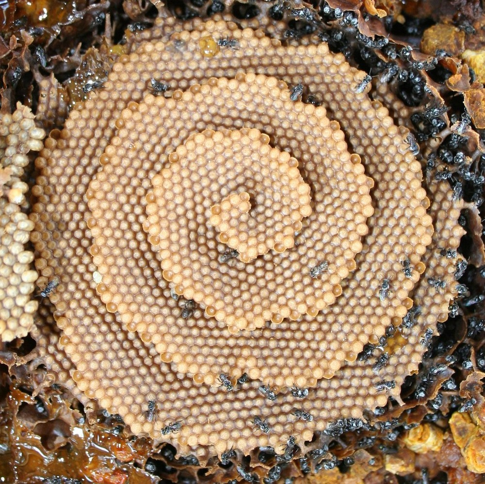 bees-hive.jpg