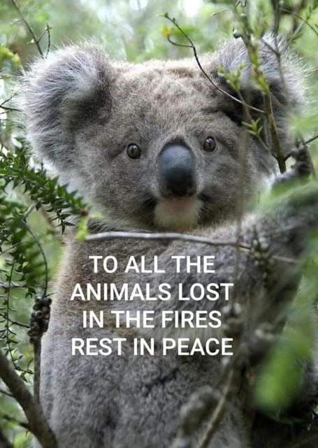 koala-fire