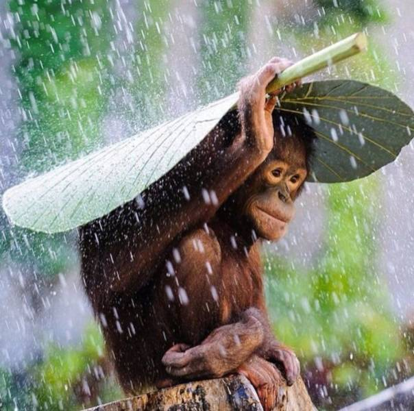 monkey-umbrella
