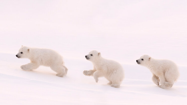 Polar-4