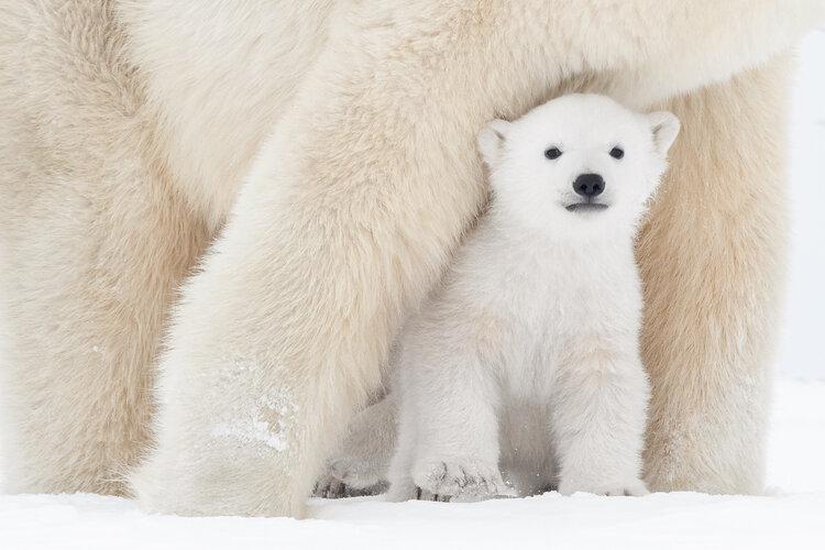 Polar-6