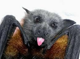 cute-bat