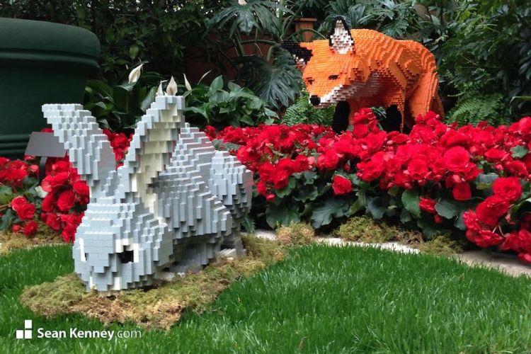 fox-chasing-rabbit