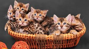 basket of kitties