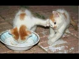 kitty-9