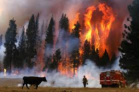 fires-3