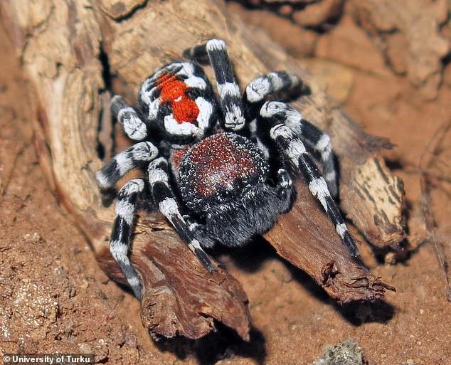 joker-spider