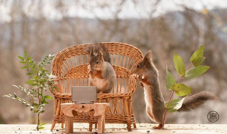 squirrel-10