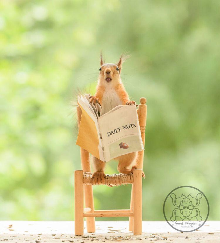 squirrel-12