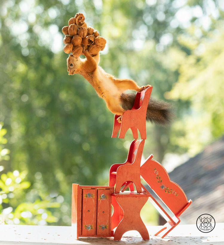squirrel-13