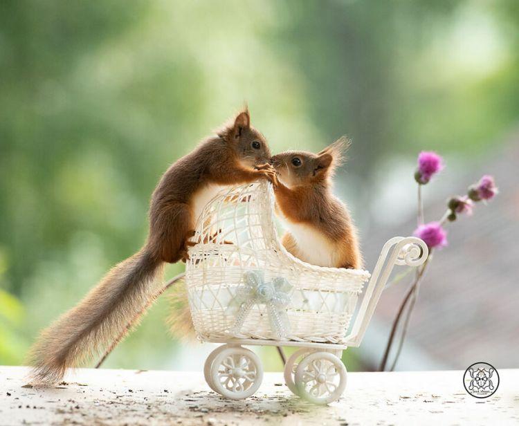squirrel-14