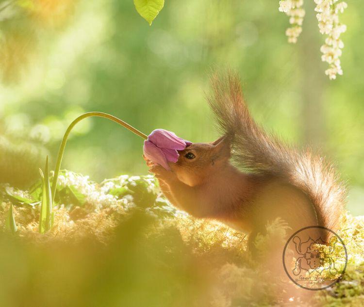 squirrel-16