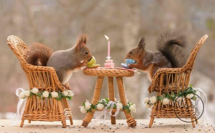 squirrel-17