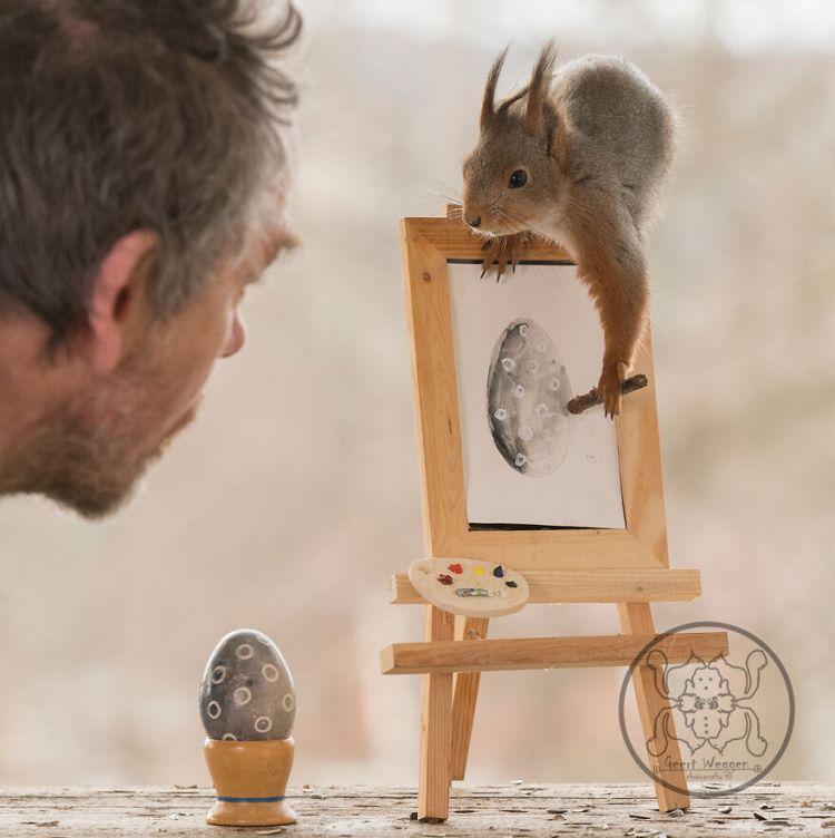squirrel-19