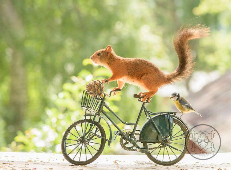 squirrel-20