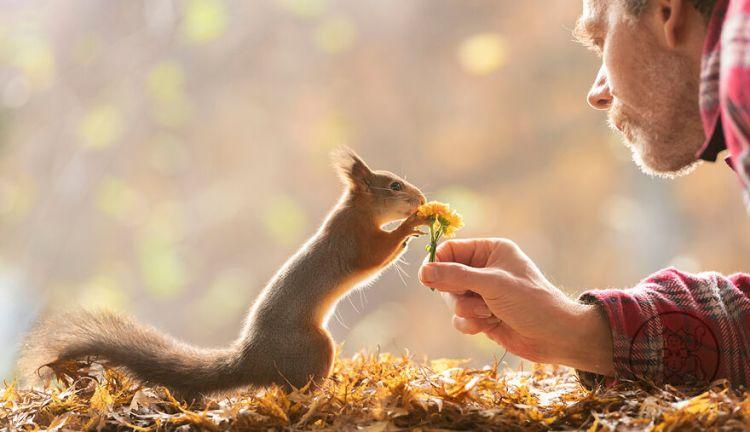 squirrel-21