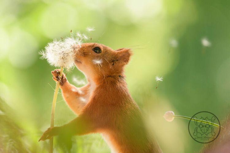 squirrel-24