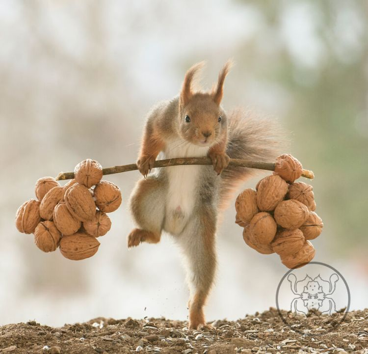 squirrel-27