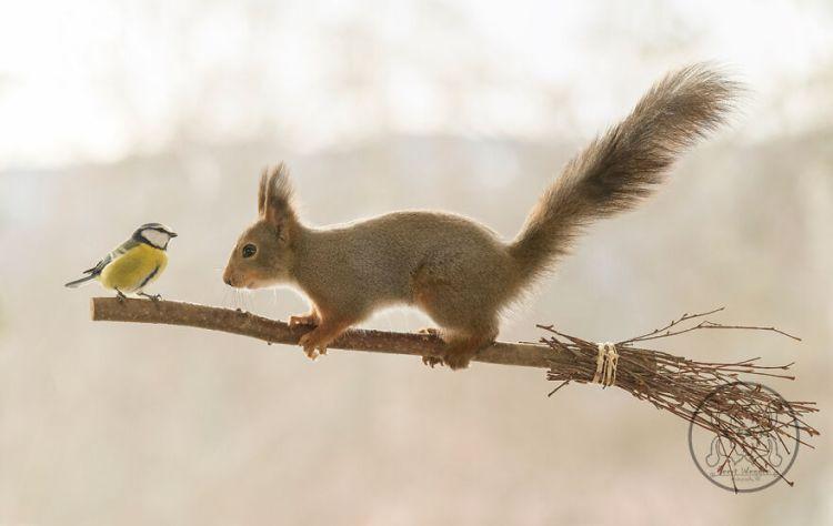 squirrel-28