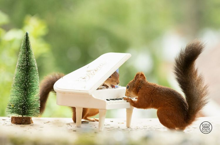 squirrel-29