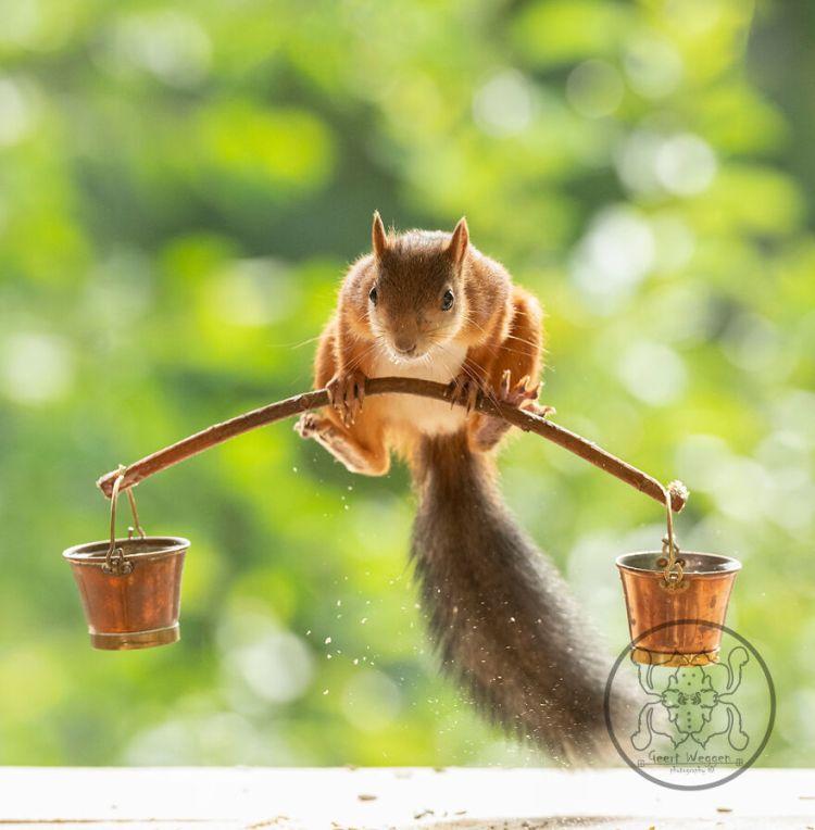 squirrel-30