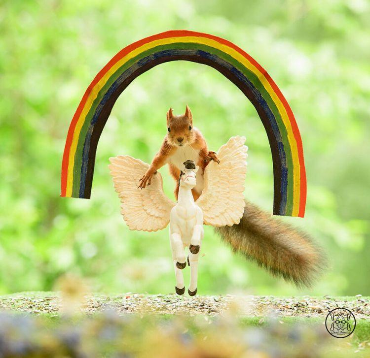 squirrel-7