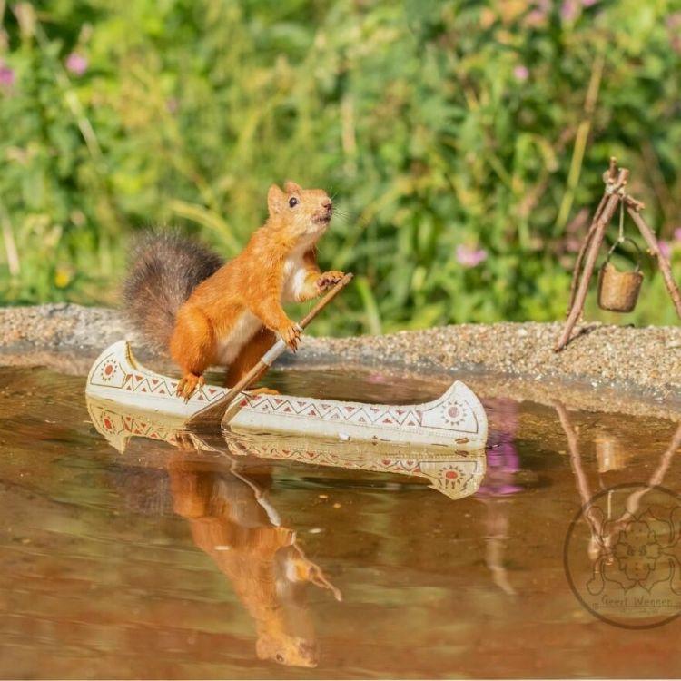 squirrel-8
