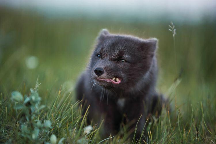 10-fox