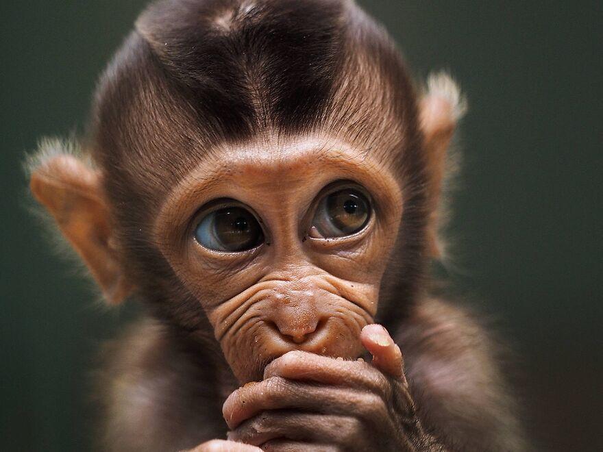 3-monkey