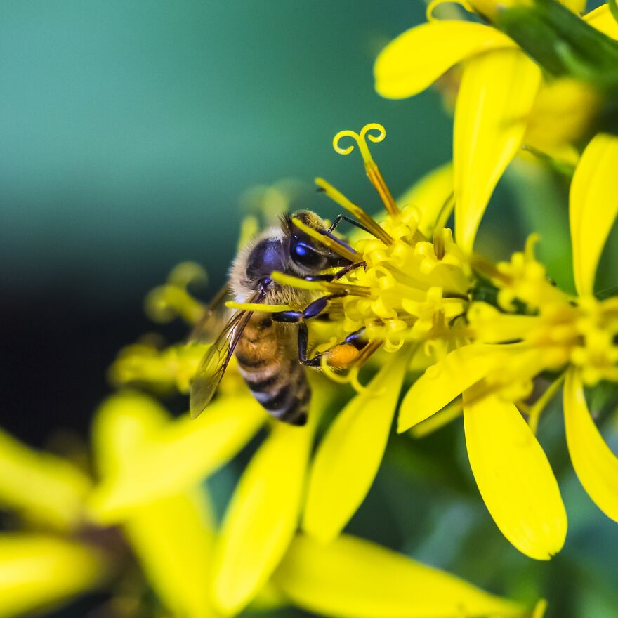 41-bee