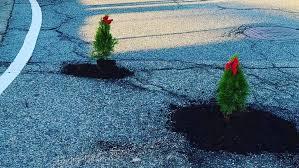 pothole-trees