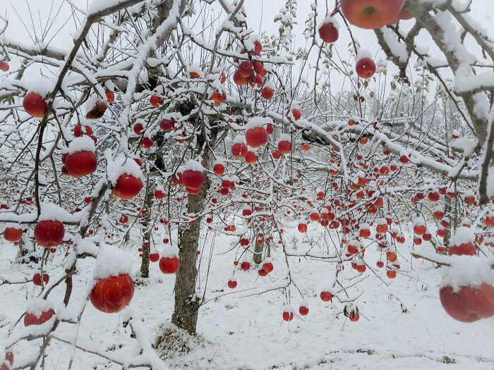 snow-20