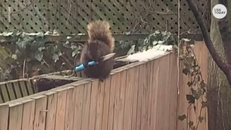 squirrel-knife